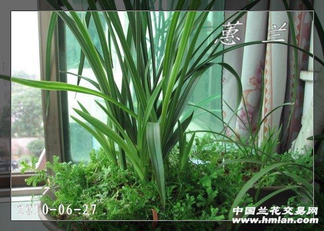 兰花营养土专用土花泥营养土